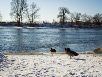 Winter an der Elbe